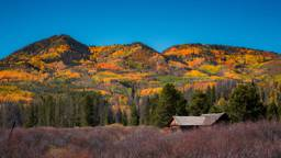 Why Leaves Change Color | A Cabin Lover's Guide to Fall Foliage